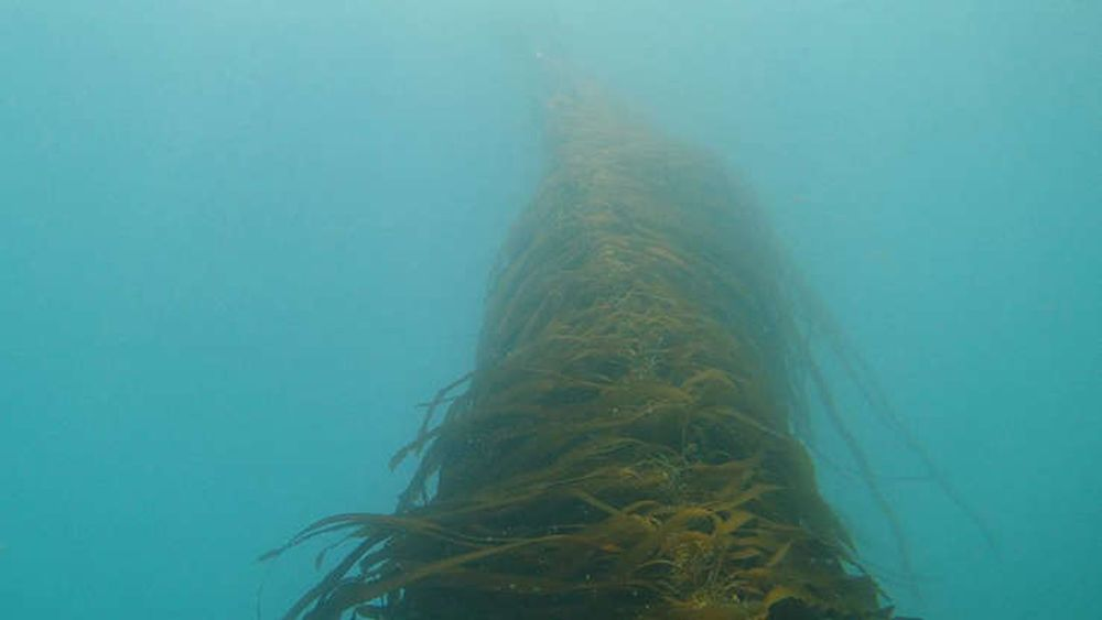 American Startup is Growing Kelp to Pull Carbon From the Air Then Sink it in the Ocean
