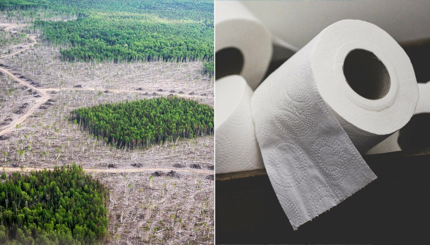 Toilet Paper and Deforestation