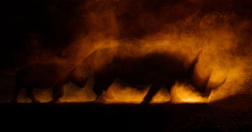 Winning Images from Nature TTL Photographer of the Year 2021