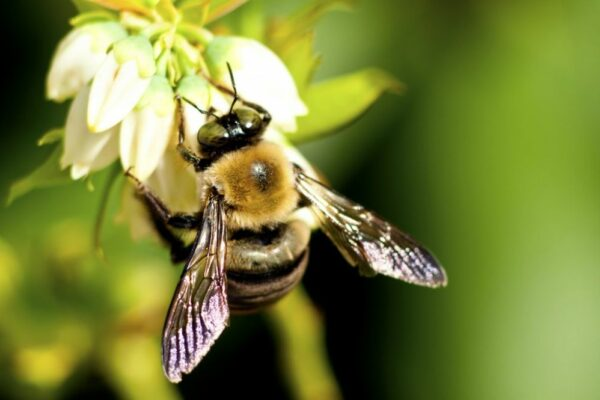 First Ever Global Risk Index Foresees The Loss Of Important Pollinators